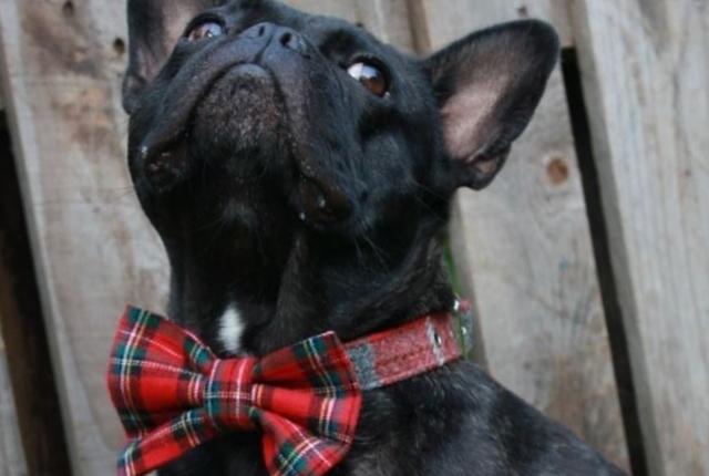 Tartan Dog Bowtie