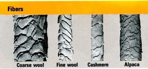 Cashmere Fibres