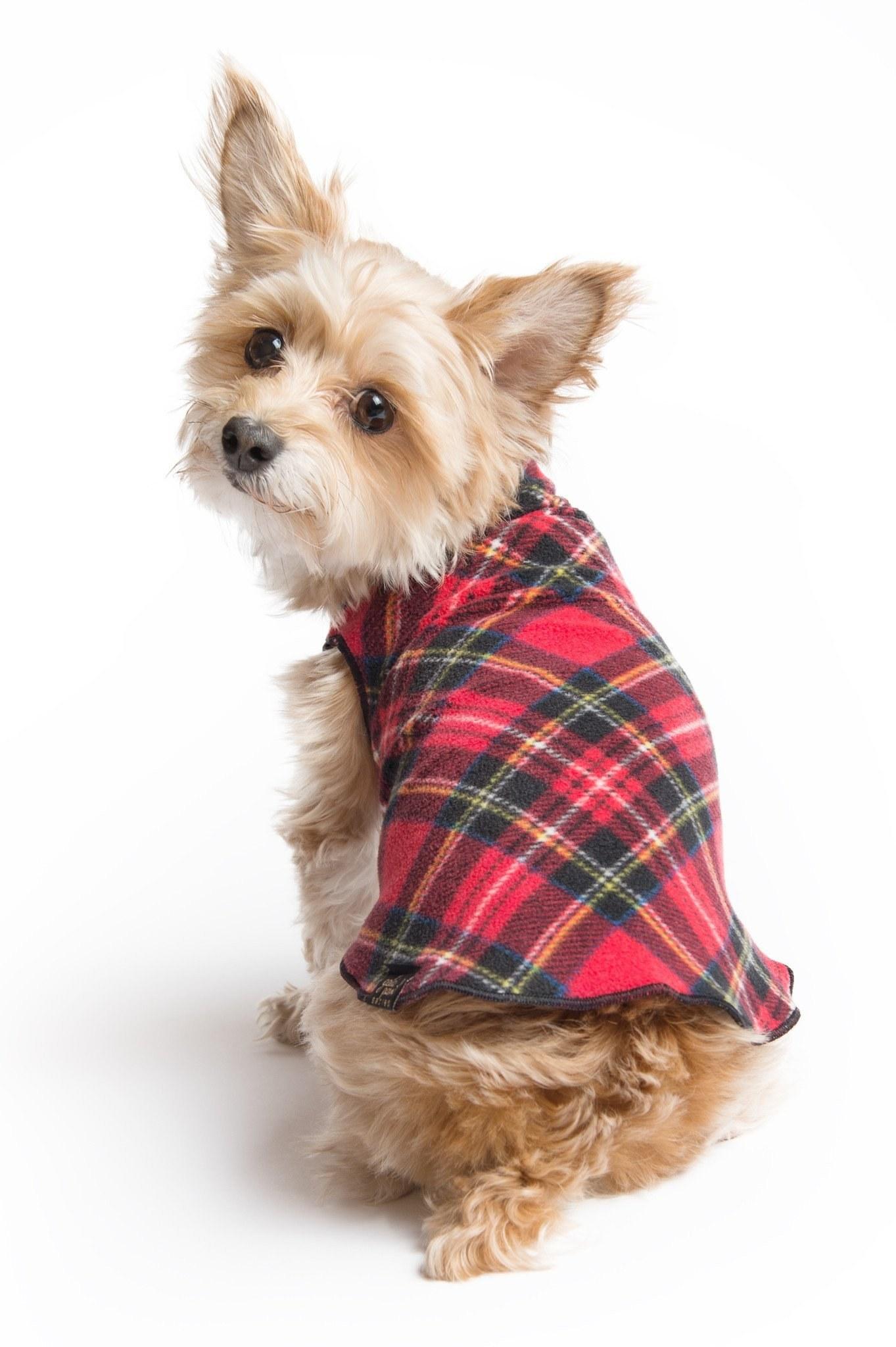 Tartan Pet Fashion - Stewart Royal