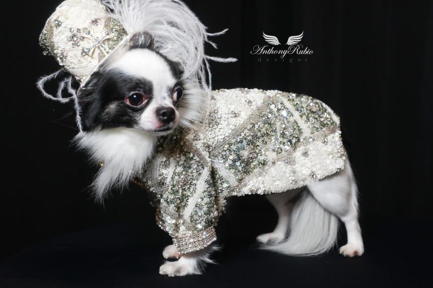 Anthony Rubio dog fashion