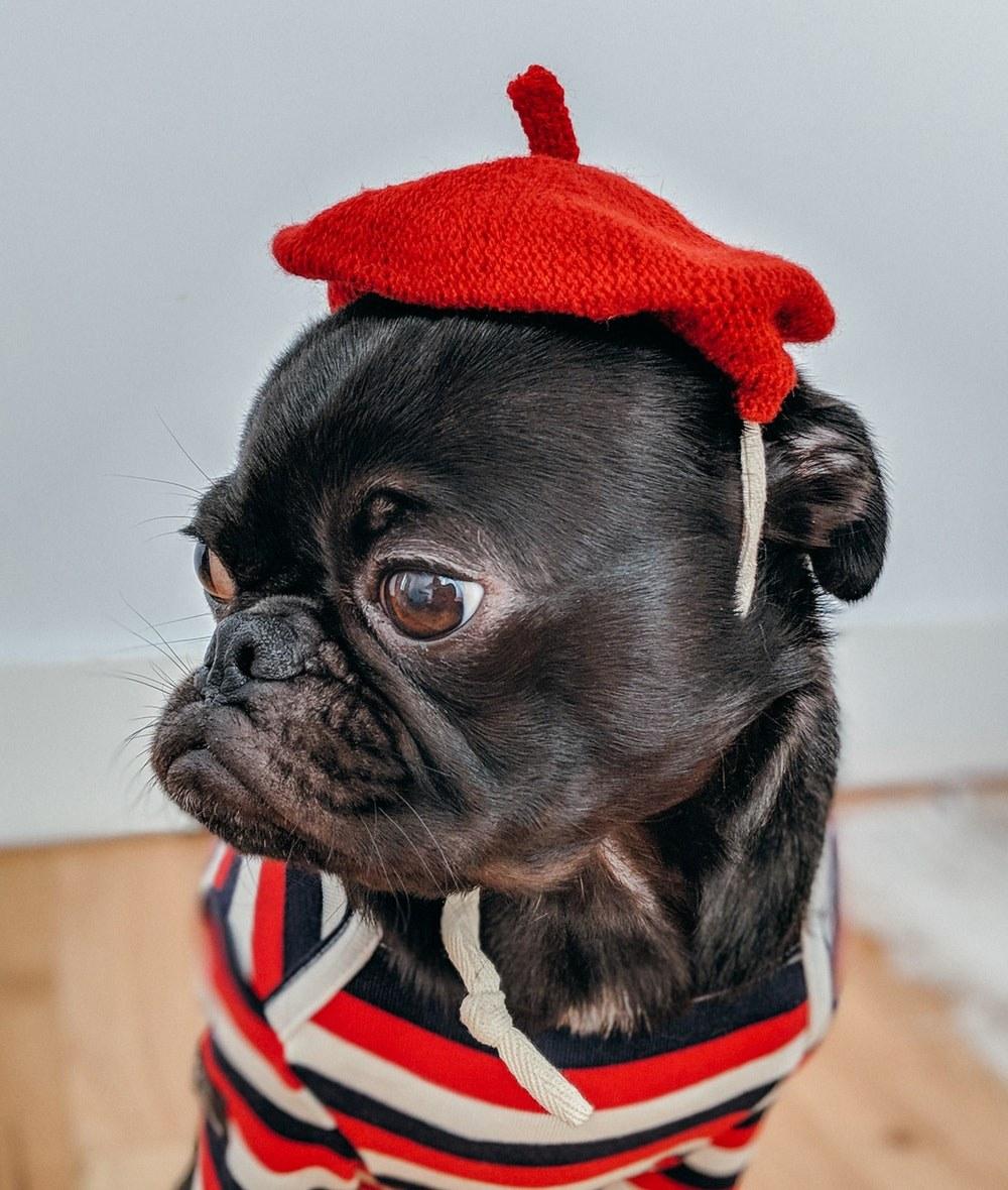 Cute Dog Accessory Flower Dog Collar Plaid Flower Dog Collar Accessory