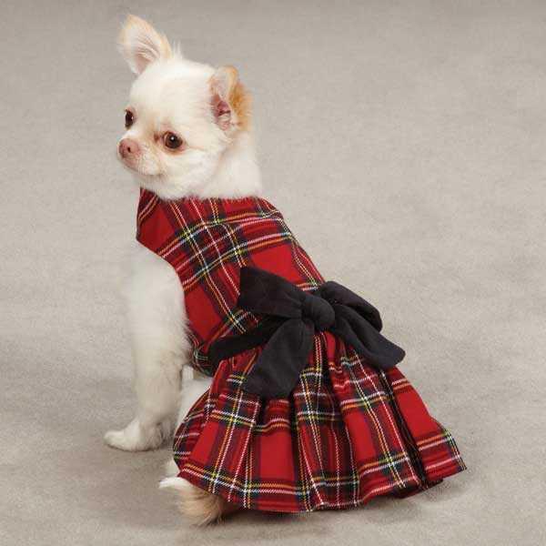 Stewart Royal Doggie Dress