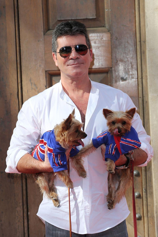Simon Cowell Terriers