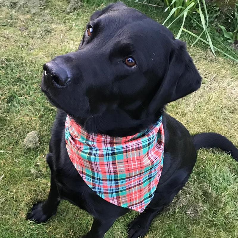 Tartan Dog Bandanna