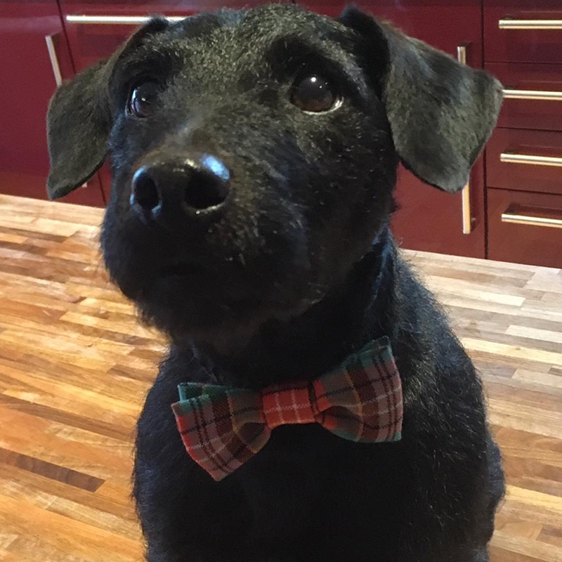 Tartan Dog Bowtie 2